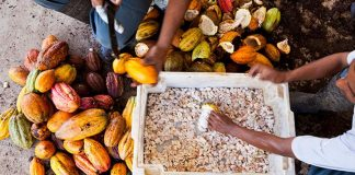 Mars to invest $1bn in new cocoa sustainability scheme